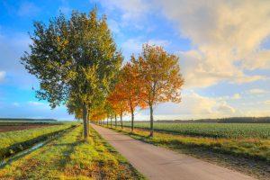road foliage trees wallpaper 4k 5k background