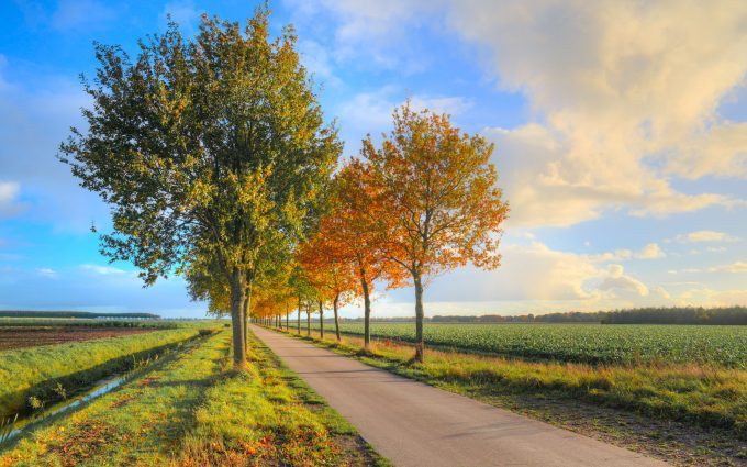 road foliage trees wallpaper 4k 5k background