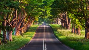 Road Under Green Trees Wallpaper 4K