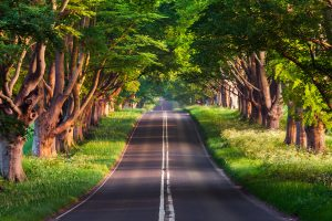 road under green trees wallpaper 4k background