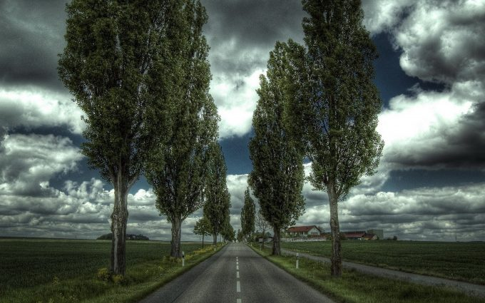 roadside trees 4k wallpaper background