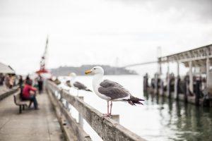 Seagull on Pier Wallpaper 4K