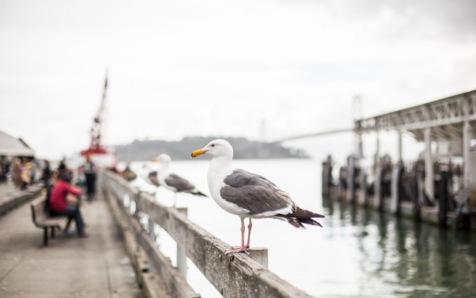 seagull on pier wallpaper 4k background