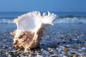 shell on beach wallpaper 4k background