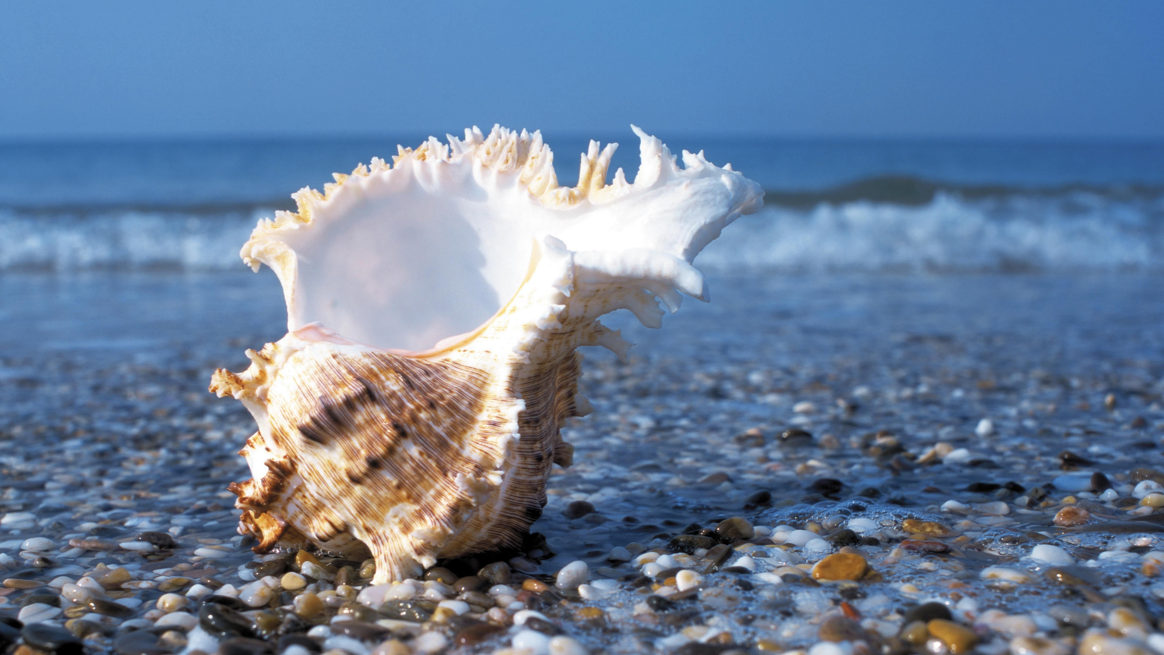 Shell Beach Wallpaper 4k Hd Background