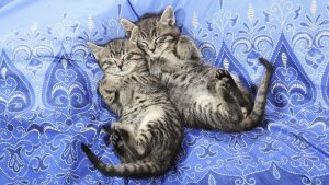 Sleeping Cats Wallpaper