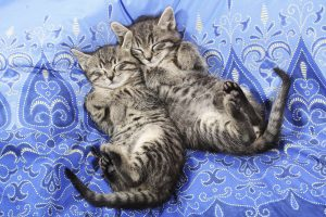 Sleeping Cats Wallpaper