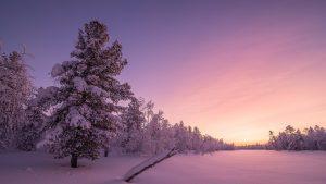 Snow on Trees Wallpaper 4K Background