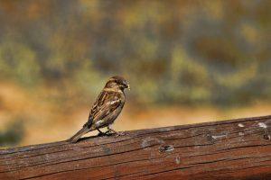 sparrow close up wallpaper 4k 5k background