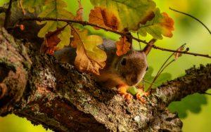 Squirrel on Tree Wallpaper