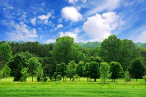 summer landscape wallpaper background, wallpapers