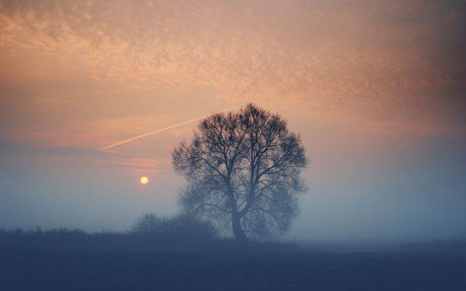 tree in fog wallpaper background