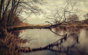 Tree in Water Wallpaper