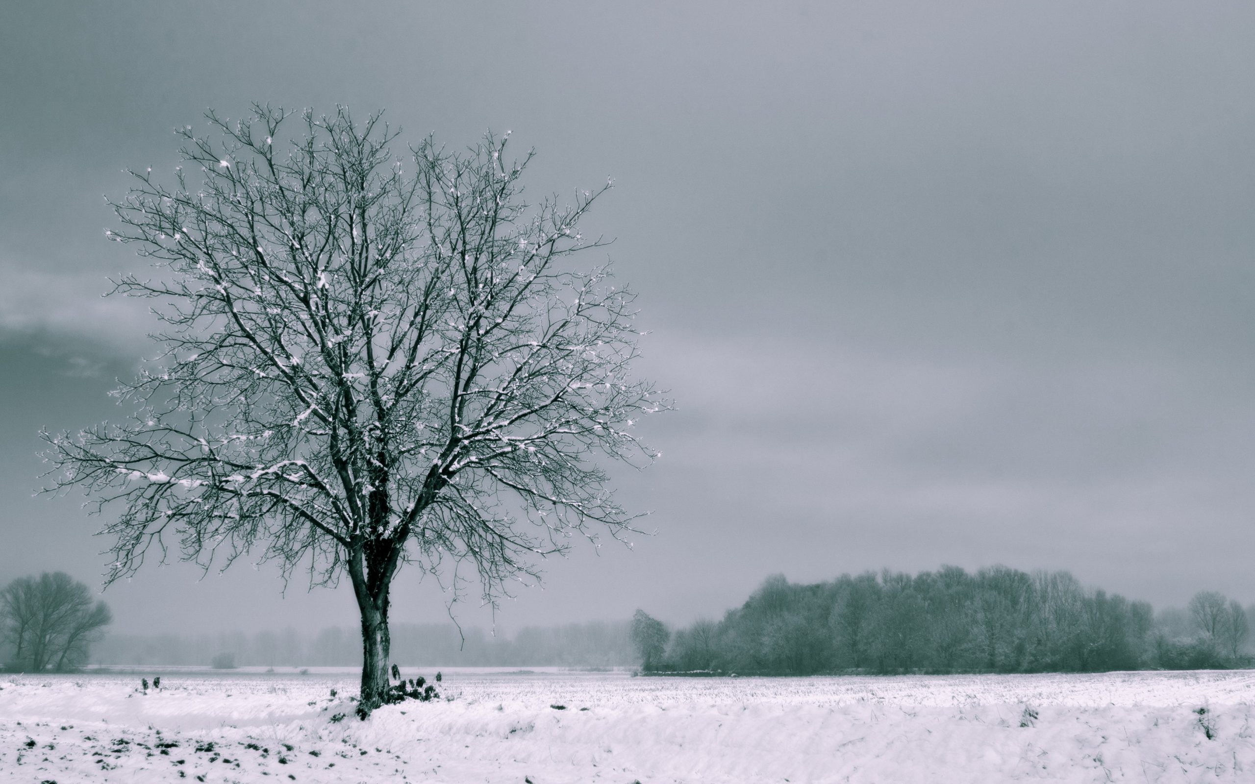 Winter wallpaper 720x1280