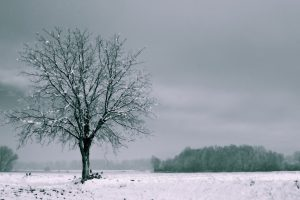 tree in winter wallpaper 4k background