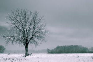 tree in winter wallpaper 4k background