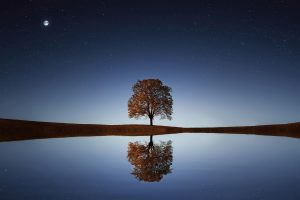 tree reflection wallpaper background