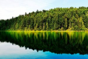 trees reflection hd wallpaper