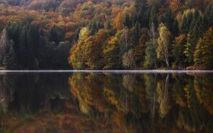 Trees Reflection in Water Wallpaper