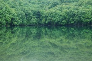 trees reflection wallpaper background