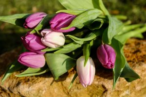 tulips flowers bouquet 4k wallpaper background