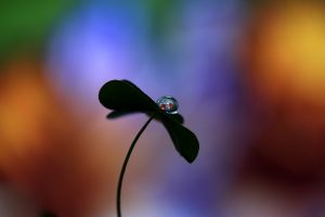 Water Drop Black Flower 4K 5K Wallpaper