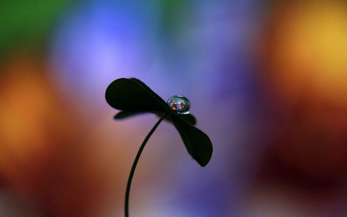 water drop black flower 4k 5k