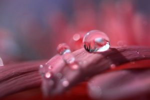 water drop macro wallpaper background