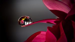 Water Drop on Flower Wallpaper