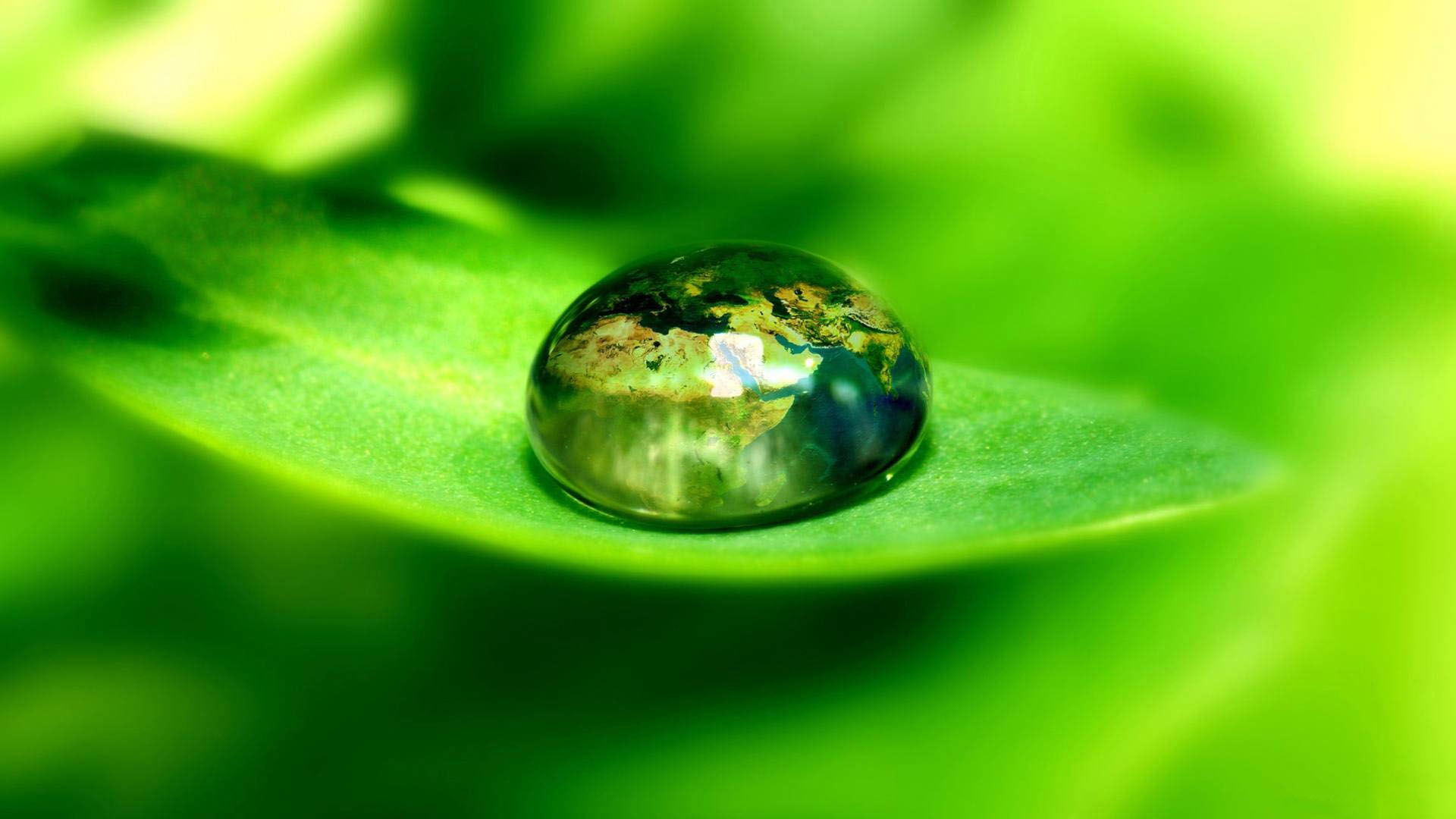 water drop on leaf wallpaper background images wallpapers