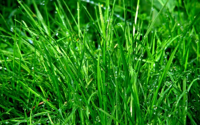 water drops on grass wallpaper background