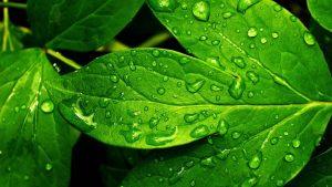 Water on Leaf Wallpaper