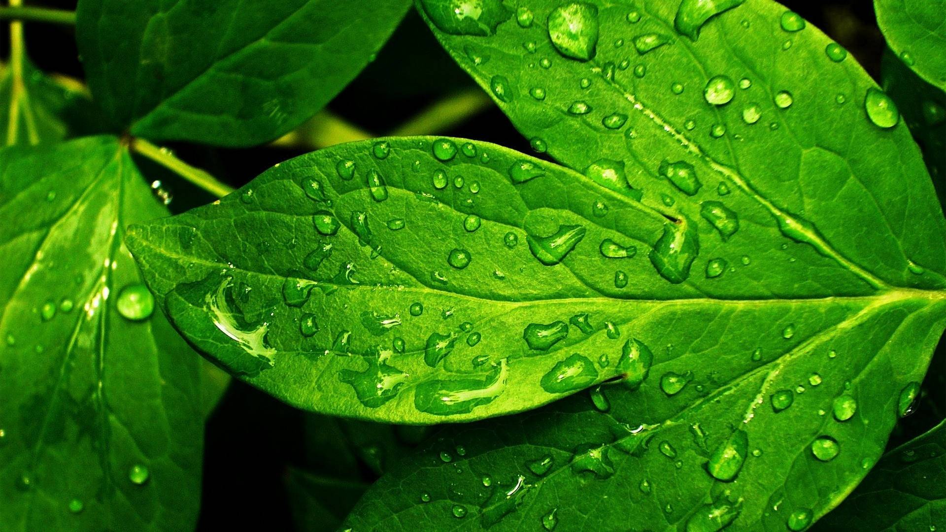 water on leaf wallpaper background