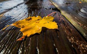 Wet Leaf Wallpaper
