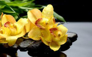 Wet Yellow Flowers Wallpaper