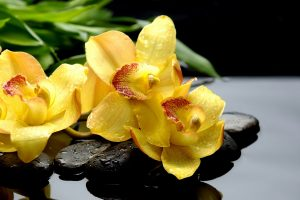 wet yellow flowers wallpaper background