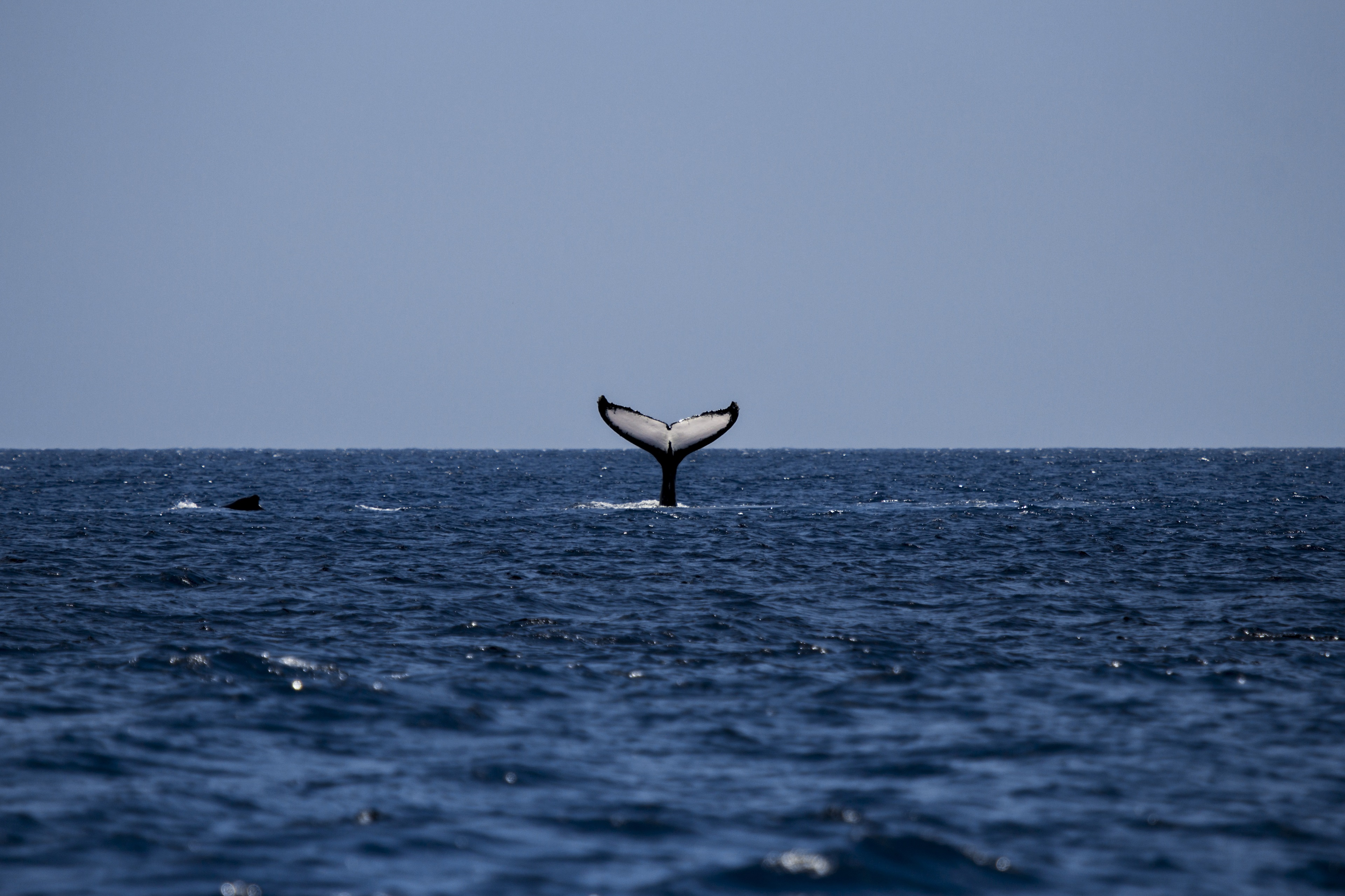 whale tail 4k wallpaper background images wallpapers