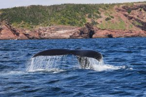 Whale Tail Wallpaper Background
