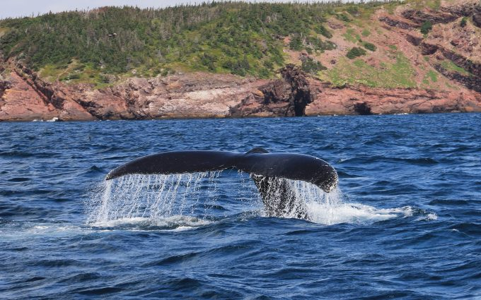 whale tail wallpaper background images wallpapers