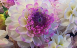 White and Purple Flower Wallpaper