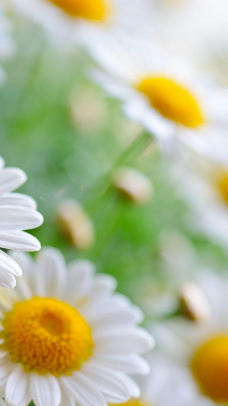White Flowers 4k 8k Wallpaper Hd Wallpaper Background