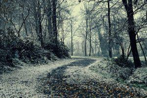 Winter Pathway Wallpaper Background