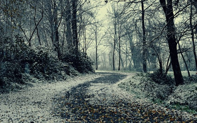 winter pathway wallpaper background