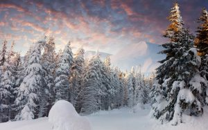 Winter Trees Wallpaper Background