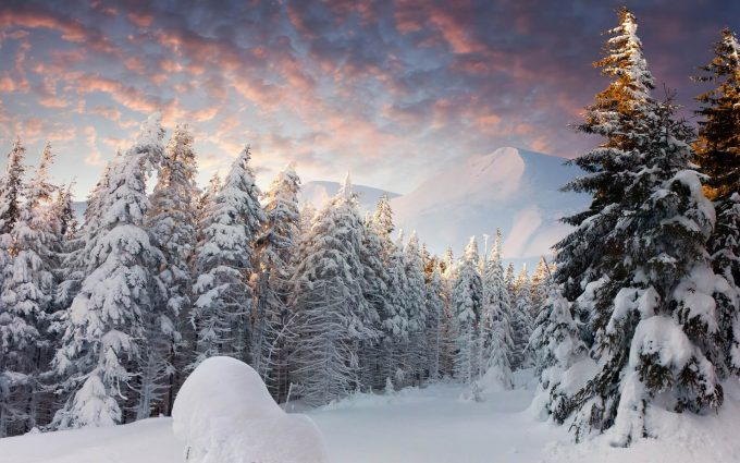winter trees wallpaper background images wallpapers