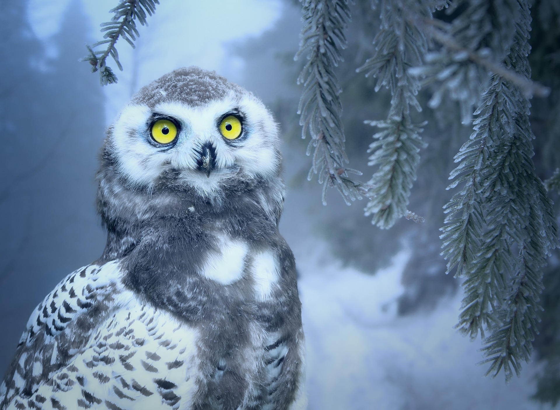 yellow eyes owl wallpaper