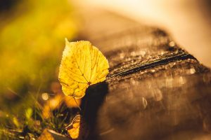 yellow leaf wallpaper background