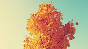 Yellow Leaves Tree Wallpaper