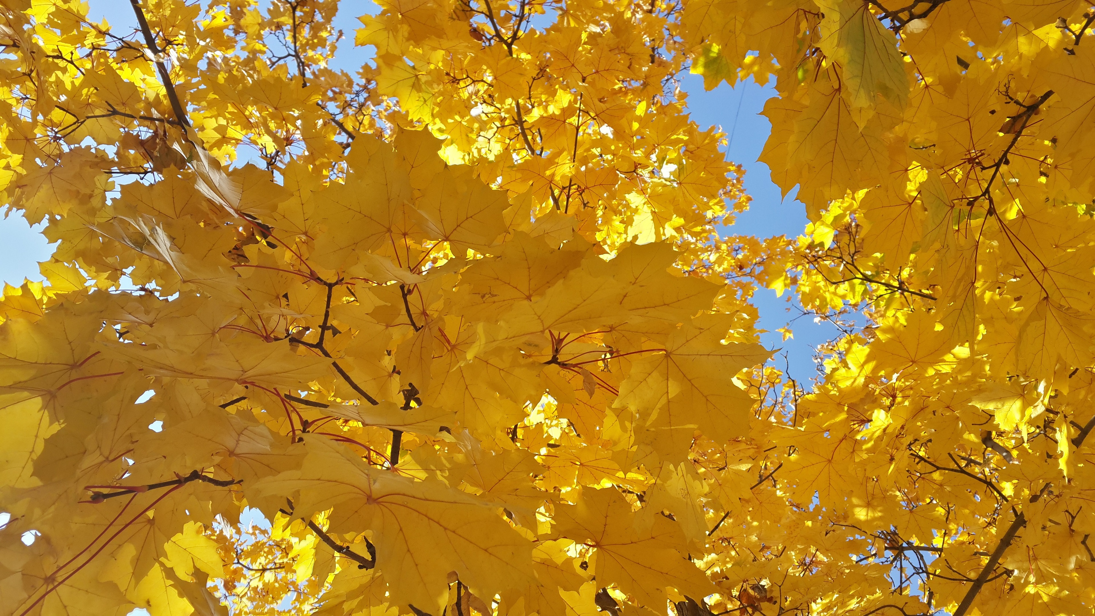 Yellow Leaves Wallpaper 4k Background Hd Wallpaper Background