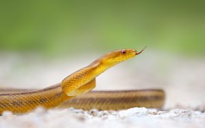 Yellow Snake Wallpaper Background